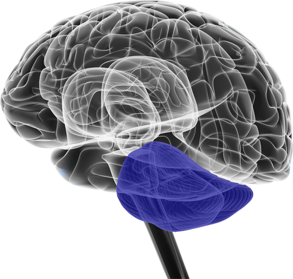 Allison Voshell Virtual Brain